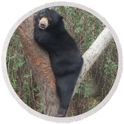 Bear In Tree   Round Beach Towel