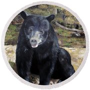 Bear - Wildlife Art - Ursus Americanus Round Beach Towel