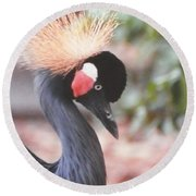 Beautiful Black Crown Crane Round Beach Towel by Belinda Lee