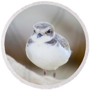 Beautiful Bird Round Beach Towel