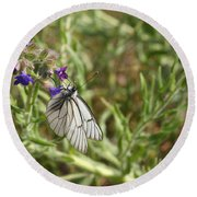 Beautiful Butterfly In Vegetation Round Beach Towel
