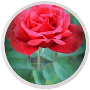 Beautiful Morning Rose  Round Beach Towel
