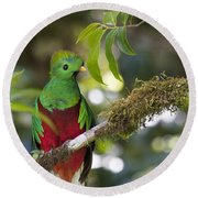 Beautiful Quetzal 1 Round Beach Towel