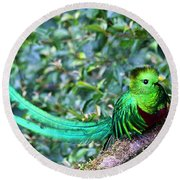 Beautiful Quetzal 3 Round Beach Towel