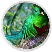 Beautiful Quetzal 4 Round Beach Towel by Heiko Koehrer-Wagner