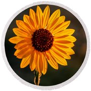 Beautiful Sunflower Round Beach Towel