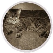 Round Beach Towel featuring the photograph Beautiful Tabby Cat by Absinthe Art By Michelle LeAnn Scott
