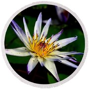 Beautiful Violet White And Yellow Water Lily Flower Round Beach Towel