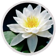 Beautiful Water Lily Capture Round Beach Towel