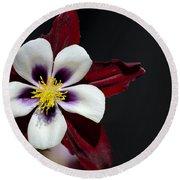 Beautiful White Petal Yellow Stamen Purple Shades Aquilegia Columbine Flower Round Beach Towel