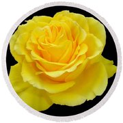 Beautiful Yellow Rose Flower On Black Background  Round Beach Towel