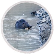 Beaver Chews On Stick Round Beach Towel