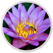 Beautiful Bee And Water Lily Round Beach Towel