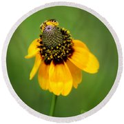 Bee My Coneflower Round Beach Towel