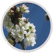 Bee On Cherry Blossoms Round Beach Towel