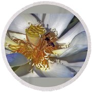 Bee On Lotus Round Beach Towel