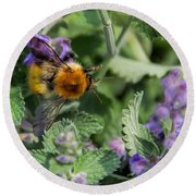 Round Beach Towel featuring the photograph Bee Too by David Gleeson