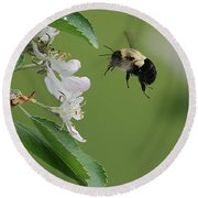 Round Beach Towel featuring the photograph Bee With Apple Blossoms by William Selander