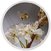 Bee Working The Bradford Pear 2 Round Beach Towel by Allen Sheffield