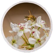 Bee Working The Bradford Pear 4 Round Beach Towel by Allen Sheffield