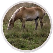 Belgian Draft Horse Round Beach Towel