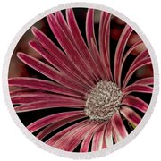 Round Beach Towel featuring the photograph Belle Of The Ball by Wallaroo Images