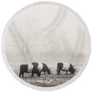 Belted Galloway Cows On Foggy Farm Field In Maine Round Beach Towel