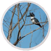Belted Kingfisher 4 Round Beach Towel