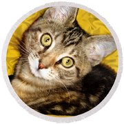 Bengal Cat Kitten Round Beach Towel