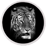 Bengal Tiger In Black And White Round Beach Towel by Venetia Featherstone-Witty