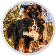 Bernese Mountain Dog And Leonberger Winter Fun Round Beach Towel