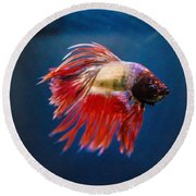 Betta Fish 2 Round Beach Towel by Lisa Brandel