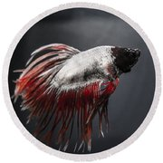 Betta Fish Round Beach Towel by Lisa Brandel