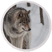 Round Beach Towel featuring the photograph Big Bad Wolf by Bianca Nadeau