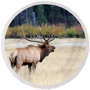 Big Colorado Bull Round Beach Towel