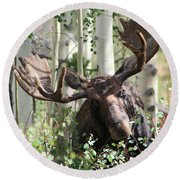 Big Daddy The Moose 3 Round Beach Towel