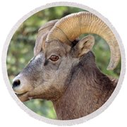 Round Beach Towel featuring the photograph Big Horn by Lynn Sprowl