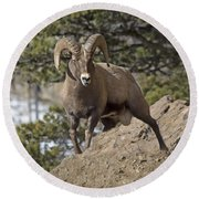 Big Horn Ram Round Beach Towel