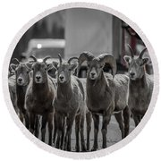 Big Horn Sheep Road Block Round Beach Towel