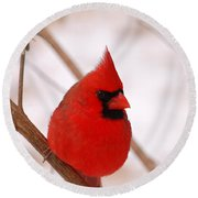 Round Beach Towel featuring the photograph Big Red  Cardinal Bird In Snow by Peggy Franz