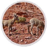 Round Beach Towel featuring the photograph Bighorn Canyon Sheep Wyoming by Janice Rae Pariza