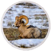 Bighorn Sheep Round Beach Towel by Greg Norrell