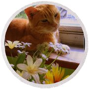 Round Beach Towel featuring the photograph Billy, My Cat by Dora Sofia Caputo Photographic Art and Design