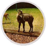 Round Beach Towel featuring the photograph Billy Goat Keeping Lookout by Amazing Photographs AKA Christian Wilson