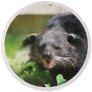 Binturong Round Beach Towel by DejaVu Designs