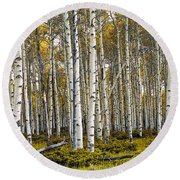 Aspen Trees In Autumn Round Beach Towel