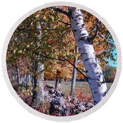 Round Beach Towel featuring the photograph Birches by Mim White
