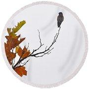 Bird Of Autumn Round Beach Towel