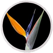 Bird Of Paradise #2 Round Beach Towel