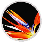 Bird Of Paradise Flower With Oil Painting Effect Round Beach Towel by Rose Santuci-Sofranko